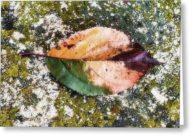 Leafed Greeting Card by Tom Druin