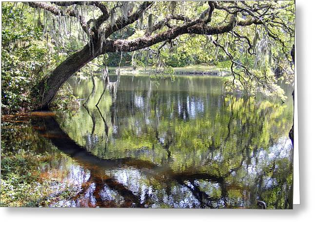 Pond Greeting Cards - Lean on Me at the Birthplace of America Greeting Card by Elena Tudor