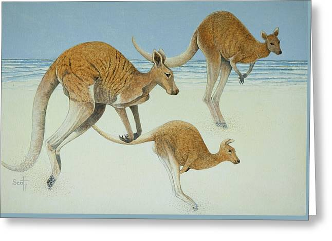 Marsupial Greeting Cards - Leaping Ahead Greeting Card by Pat Scott