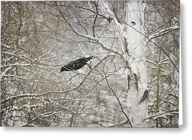 Snowy Day Greeting Cards - Leaping Crow Greeting Card by Angie Rea