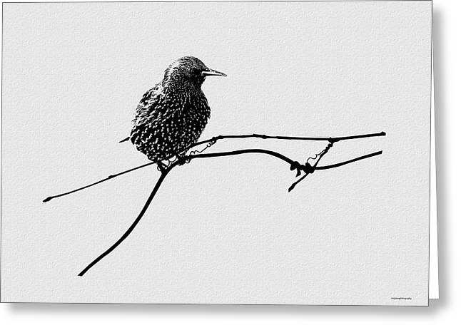 Learning To Fly Greeting Card by Ron Jones