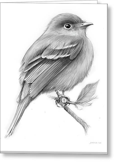 Least Flycatcher Greeting Card by Greg Joens