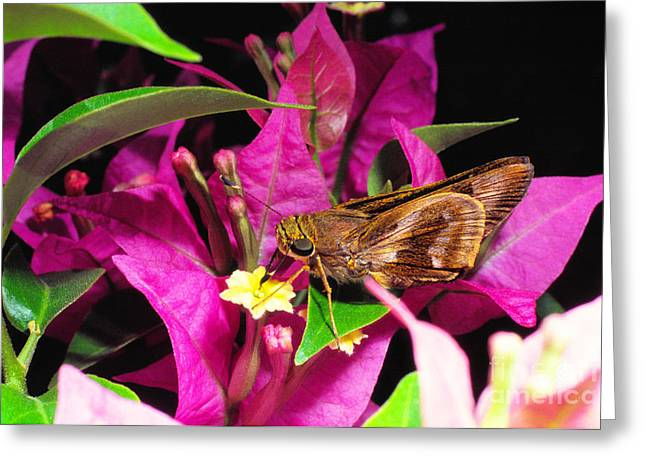 Glabra Greeting Cards - Least Skipper Butterfly Greeting Card by Thomas R Fletcher