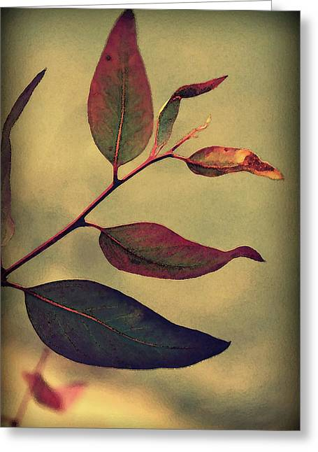 Eucalyptus Greeting Cards - Leaves Greeting Card by Amy Neal