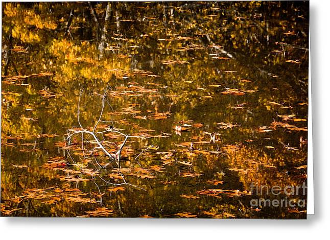 New England Wilderness Greeting Cards - Leaves and Reflections Greeting Card by Susan Cole Kelly