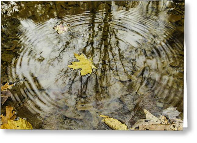 Water Fall Greeting Cards - Leaves and water Greeting Card by Andrew McElvery