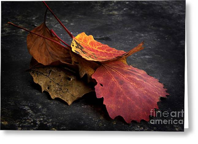 Fragility Photographs Greeting Cards - Leaves Greeting Card by Bernard Jaubert