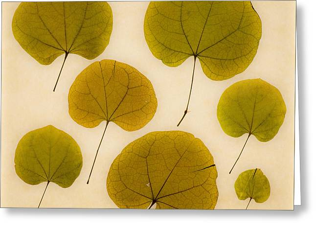Assorted Paintings Greeting Cards - Leaves Greeting Card by Graeme Harris