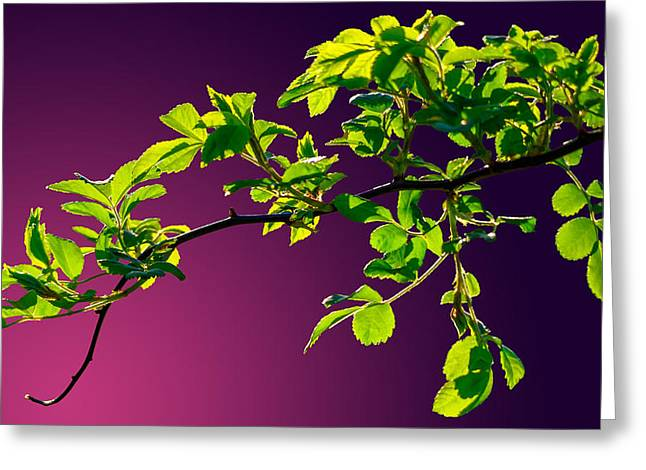 Nature Abstract Greeting Cards - Leaves Of Eve 2 Greeting Card by Brian Stevens