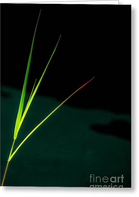 Green Abstract Greeting Cards - Leaves of Grass Greeting Card by James Aiken