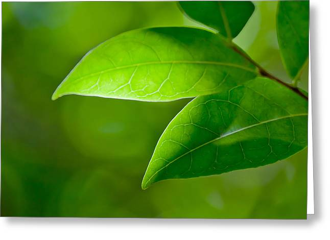 Leaves Of Green Greeting Card by Az Jackson