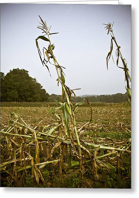 Sweet Corn Farm Greeting Cards - Left Behind Greeting Card by Tim  Fitzwater