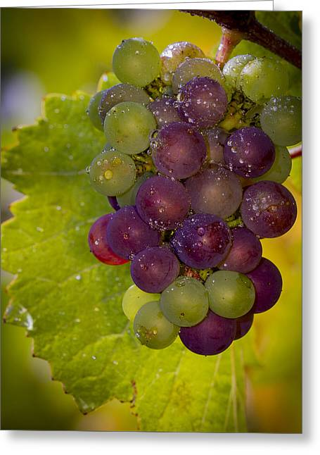 Clusters Of Grapes Greeting Cards - Leftover pinot cluster Greeting Card by Jean Noren