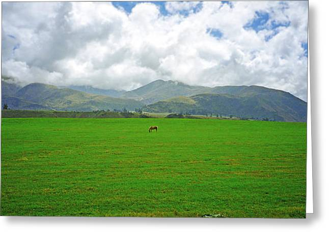Lone Horse Photographs Greeting Cards - Leg Room  Greeting Card by Kevin Smith