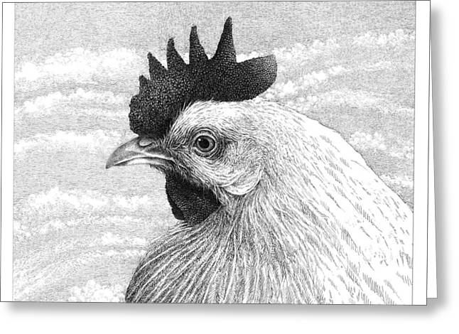 Pen And Ink Drawing Greeting Cards - Leghorn Hen in Profile Greeting Card by William Beauchamp