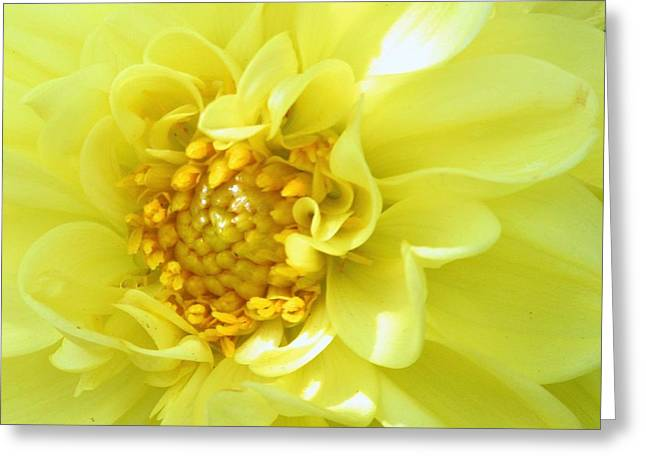 Lemon Art Greeting Cards - Lemon Dream Greeting Card by Lori Pessin Lafargue