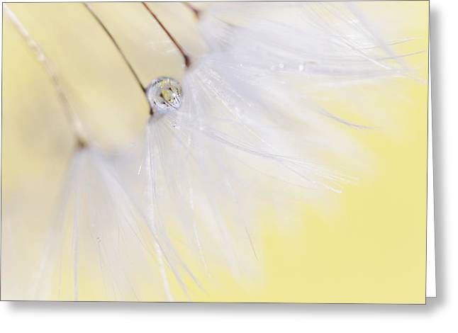 Lemon Art Greeting Cards - Lemon Drop Greeting Card by Amy Tyler