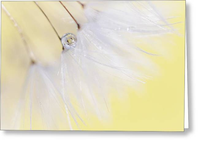 Print On Canvas Greeting Cards - Lemon Drop Greeting Card by Amy Tyler