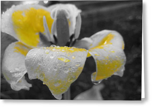 Lemon Drops II Greeting Card by Toni Jackson