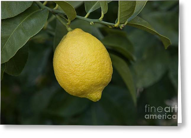 Lemon Lisbon Greeting Card by Inga Spence