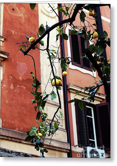 Lemon Art Greeting Cards - Lemon Tree Greeting Card by John Rizzuto
