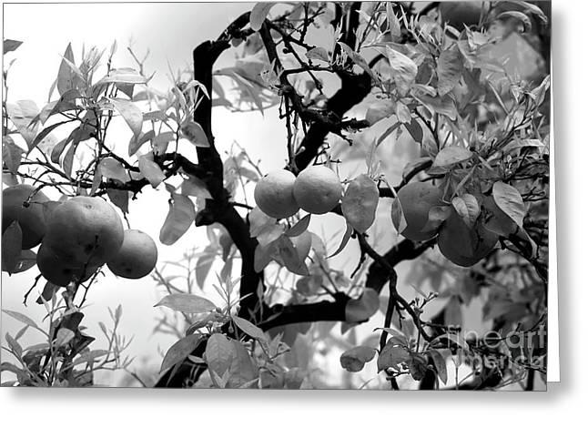 Fruit Tree Art Greeting Cards - Lemons Greeting Card by John Rizzuto