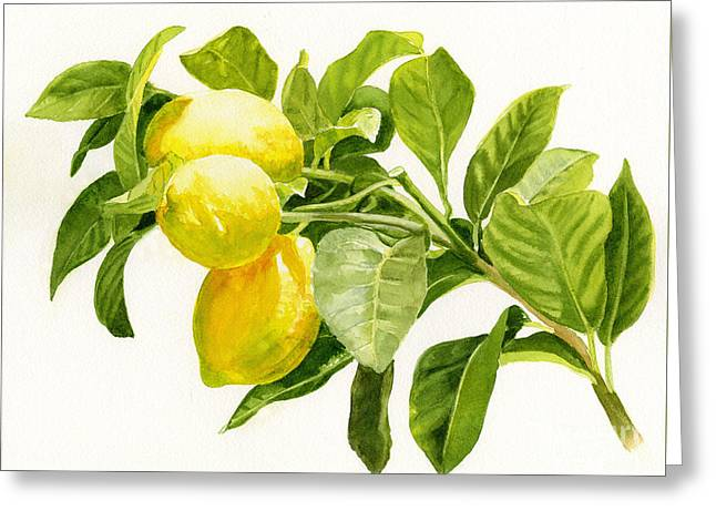 Lemon Art Greeting Cards - Lemons on a Branch Greeting Card by Sharon Freeman