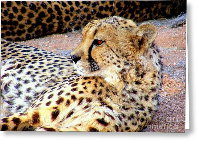 Best Seller Greeting Cards - Leopard     Greeting Card by Noa Yerushalmi