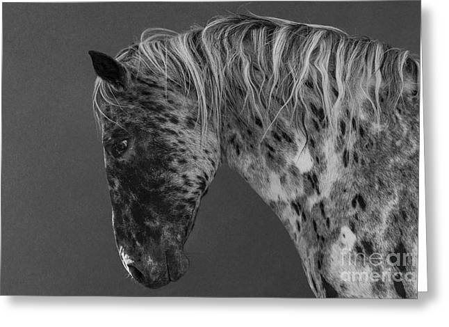 Spotted Horse Greeting Cards - Leopard Appaloosa II Greeting Card by Carol Walker