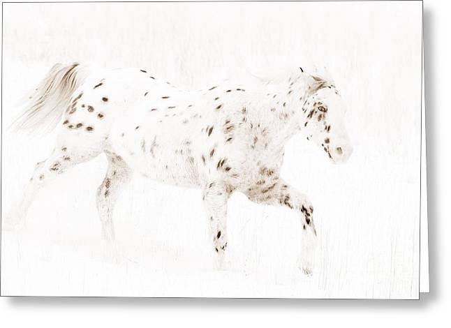 Leopard Running Greeting Cards - Leopard Appaloosa Runs in Snow Greeting Card by Carol Walker