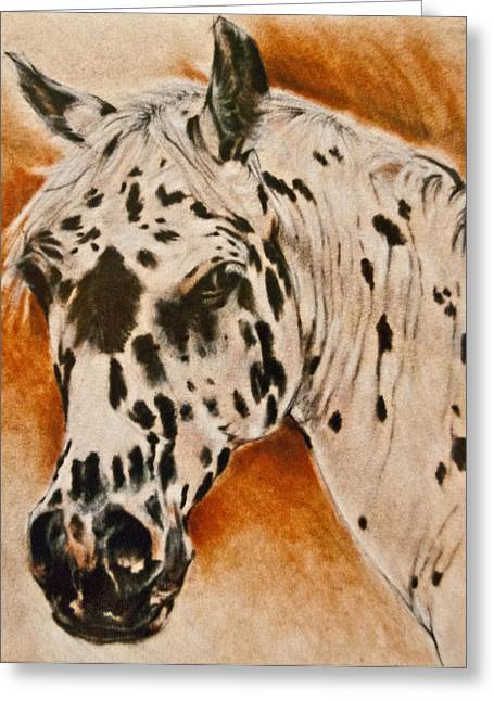 Equine Art Pastels Pastels Greeting Cards - Leopard Appy Greeting Card by Jani Freimann