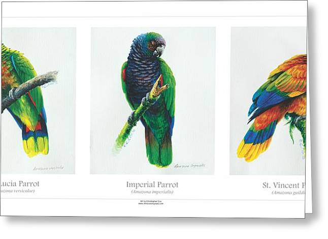 St. Lucia Parrot Greeting Cards - Lesser Antillean Parrots triptych Greeting Card by Christopher Cox