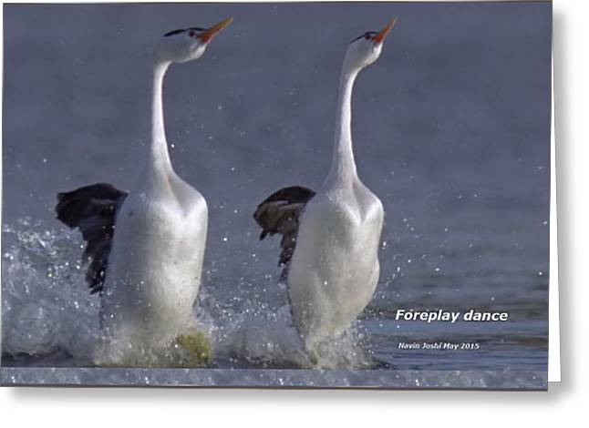 Recently Sold -  - Abstract Digital Mixed Media Greeting Cards - Let humans learn from the nature  Foreplay dance it pleases everyone Greeting Card by Navin Joshi