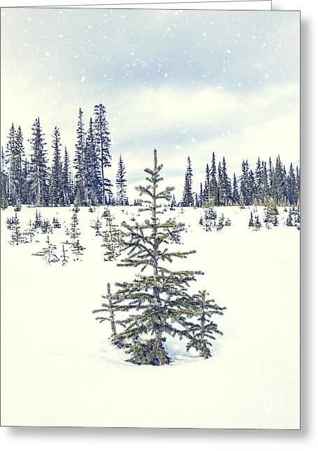 Let It Snow Greeting Card by Evelina Kremsdorf