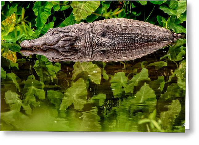 Ocular Perceptions Greeting Cards - Let Sleeping Gators Lie Greeting Card by Christopher Holmes