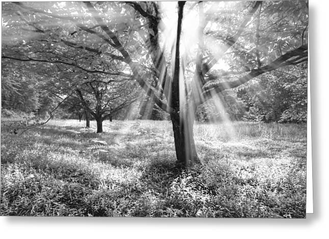 Let There Be Light Greeting Card by Debra and Dave Vanderlaan
