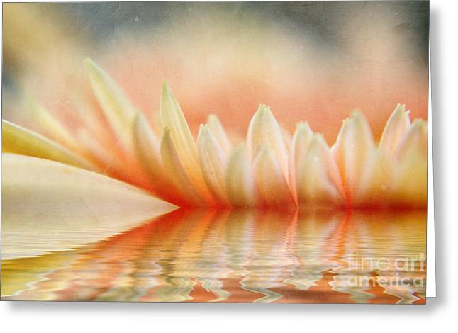 Fragrant Greeting Cards - Letter Greeting Card by SK Pfphotography