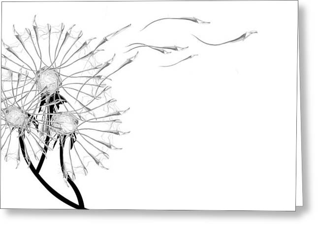 Black And White Greeting Cards - Letting Go Being Free Greeting Card by Aiden Galvin