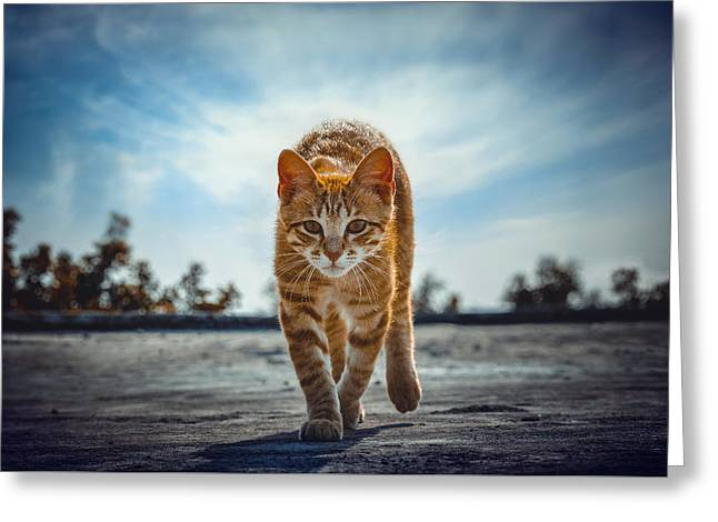 Cats Photographs Greeting Cards - Letting Go Greeting Card by Steeven Shaw