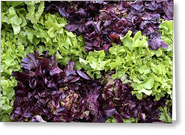 Orange Glass Greeting Cards - Lettuce And Radicchio. Greeting Card by Giuseppe Elio Cammarata