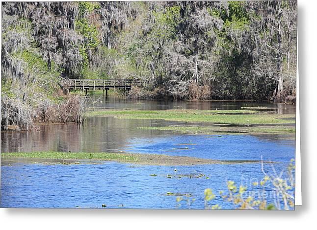 Alga Greeting Cards - Lettuce Lake with Bridge Greeting Card by Carol Groenen