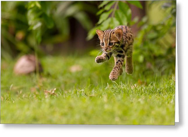 Levitating Leopard Cat Greeting Card by Ashley Vincent