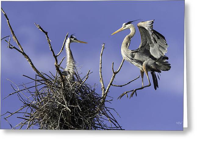 Great Blue Heron Greeting Cards - Levitation Greeting Card by Everet Regal