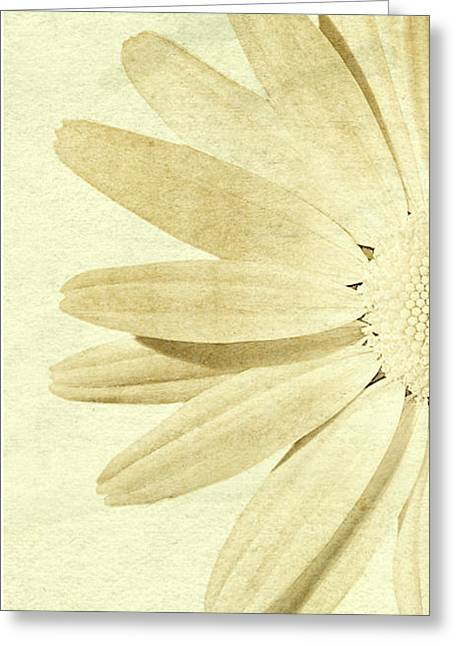 Daiseys Greeting Cards - LH daisey Greeting Card by Jim  Hatch
