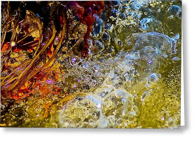 Ocean Art Photos Greeting Cards - Life At The Edge Of The Sea Greeting Card by Lisa Scott