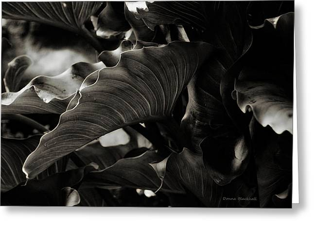 Life Isn't Black And White Greeting Card by Donna Blackhall