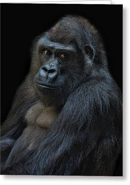Primate Greeting Cards - Life Is Not Allways Funny Greeting Card by Joachim G Pinkawa