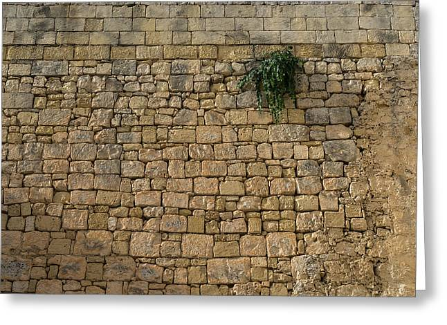 Life On Bare Rock - Up High On The Fortification Wall Greeting Card by Georgia Mizuleva