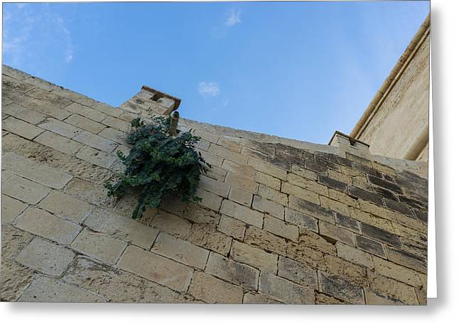 Life On Bare Rock - Up On The Citadel Wall In Victoria Gozo Greeting Card by Georgia Mizuleva
