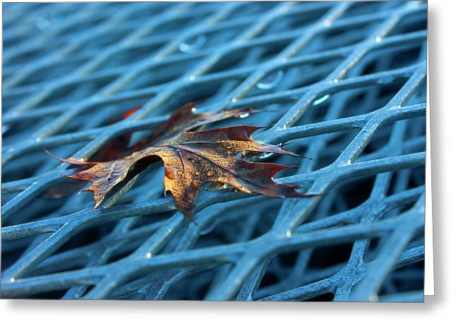Complimentary Greeting Cards - Life On the Grid Greeting Card by Barbara  White